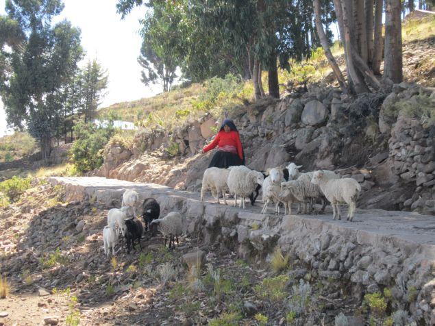 Schafe-auf-Taquile