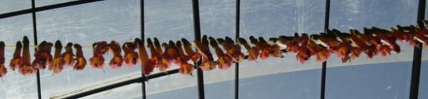 Titicacasee-Hochzeit-625x145