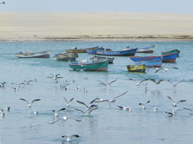 Im Nationalpark Paracas